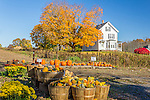 Fall in West Newbury, Massachusetts, USA