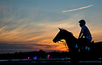 August 29, 2015 : Scenes from morning workouts before the mayhem starts of Travers Stakes Day at Saratoga Race Course in Saratoga Springs, NY. Scott Serio/ESW/CSM