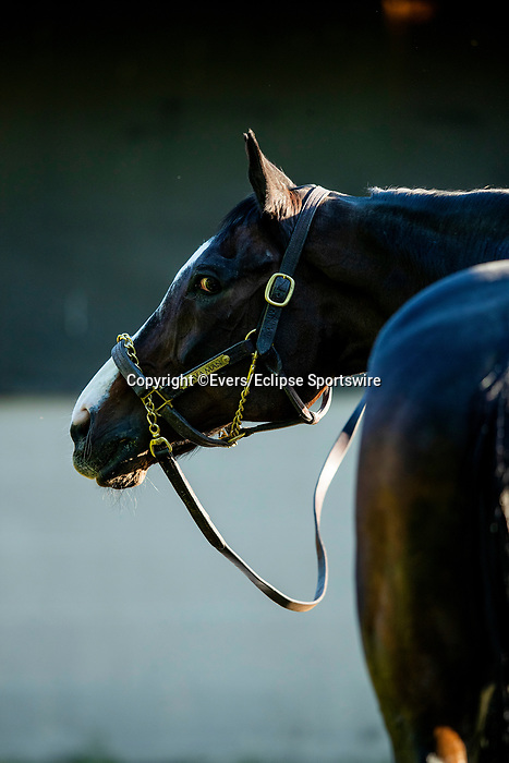 April 27, 2021 Hall of Fame Lava Man gets a bath after his work ponying the O'Neil horses at Churchill Downs in Louisville, Kentucky on April 27, 2021. EversEclipse Sportswire/CSM