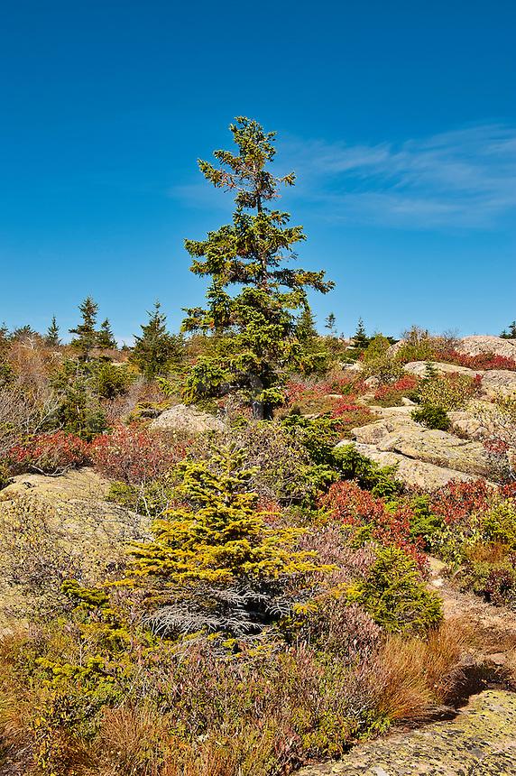 Cadillac Mountain landscape, Acadia National Park, Maine, USA