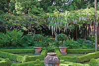 A formal box parterre planted in a contemporary geometric design contrasts with lush ferns and cascading white wisteria