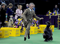 AbUSAWestminsterDogShow