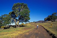 Mountain biking Mana road, Mauna Kea, Big island of Hawaii
