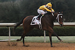 HOT SPRINGS, AR - February 18: Terra Promessa #2, ridden by Ricardo Santana, Jr., wins the Bayakoa Stakes at Oaklawn Park on February 18, 2017 in Hot Springs, AR. (Photo by Ciara Bowen/Eclipse Sportswire/Getty Images)