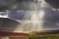 Rain squall over the Plains of Murie, Denali National Park, Interior, Alaska.