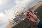 A hand holds some ice collected from a lake in Baffin Island, Nunavut, Northern Canada.
