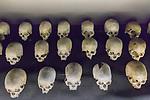 Skulls Of People Killed In 1994 Genocide, Kigali Genocide Museum