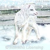 Sinead, CHRISTMAS ANIMALS, WEIHNACHTEN TIERE, NAVIDAD ANIMALES, paintings+++++,LLSJ2160A,#xa# .sheep,sheeps