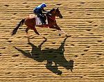 May 15, 2019 :  Bodexpress exercises on the track as horses prepare for Preakness Week at Pimlico Race Course in Baltimore, Maryland. Scott Serio/Eclipse Sportswire/CSM