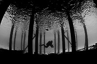 Scuba diver beneath dock with underwater camera, Bonaire, Netherland Antilles, Caribbean Sea, Atlantic Ocean