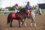 September 19, 2020: #1 March to the Arch, ridden by Patrick Husbands and trained by Mark Casse heads to the post for the Grade 1 Ricoh Woodbine Mile at Woodbine Racetrack in Toronto, Ontario, Canada.