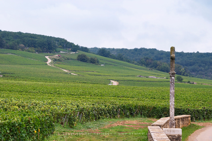 Vineyard. La Romanee Conti Grand Cru with stone cross. Richebourg in the back. Vosne Romanee, Cote de Nuits, d'Or, Burgundy, France