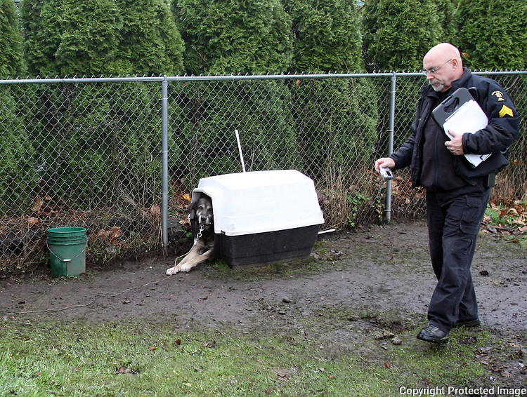 King County Animal Care and Control cruelty investigator, Sgt. David Morris, records the sccene of a dog in Enumclaw, Wash. on December 10, 2008.  The Husky mix had no water, was living admist feces everywhere, and his shelter was too small for him. (Karen Ducey/Seattle Post-Intelligencer)