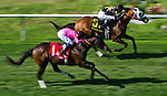 March 29, 2014: Skyring (6), ridden by Joe Rocco Jr., wins the Mervin H. Muniz Jr. Stakes on Louisiana Derby Day at the Fairgrounds Race Course in New Orleans, LA. Scott Serio/ESW/CSM
