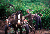 Irish farmers loading a horse drawn cart, Ireland