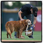 Jake the Diamond Dog entertained fans at the Greenville Drive game last night. So here is my obligatory image of Jake delivering water to umpire Drew Saluga. (Tom Priddy/Four Seam Images)