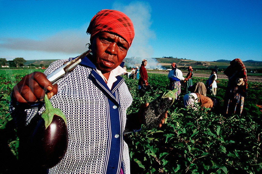 A portrait of a South African woman field worker harvesting vegetables. Western Cape, South Africa.