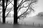 Europa, DEU, Deutschland, Nordrhein Westfalen, NRW, Rheinland, Niederrhein, Xanten, Naturschutzgebiet Xantener Altrhein, Bislicher Insel, Baeume, Pappeln, Pappelbaeume, Sonnenuntergang, Schnee, Winter, Nebel, Bodennebel, Kategorien und Themen, Natur, Umwelt, Landschaft, Jahreszeiten, Stimmungen, Landschaftsfotografie, Landschaften, Landschaftsphoto, Landschaftsphotographie, Natur, Naturfoto, Naturfotos, Naturfotografie, Naturphoto, Naturphotographie, Landschaft, Landschaften, Landschaftsfoto, Landschaftsfotografie, Landschaftsphoto, Landschaftsphotographie<br /> <br /> [Fuer die Nutzung gelten die jeweils gueltigen Allgemeinen Liefer-und Geschaeftsbedingungen. Nutzung nur gegen Verwendungsmeldung und Nachweis. Download der AGB unter http://www.image-box.com oder werden auf Anfrage zugesendet. Freigabe ist vorher erforderlich. Jede Nutzung des Fotos ist honorarpflichtig gemaess derzeit gueltiger MFM Liste - Kontakt, Uwe Schmid-Fotografie, Duisburg, Tel. (+49).2065.677997, <br /> archiv@image-box.com, www.image-box.com]