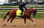 LOUISVILLE, KY - APRIL 23: Whitmore (Pleasantly Perfect x Melody's Song, by Scat Daddy) gallops on track at Churchill Downs in preparation for the Kentucky Derby. Owner Robert V. LaPenta, Harry T. Rosenblum, and Southern Springs Stables. (Photo by Mary M. Meek/Eclipse Sportswire/Getty Images)