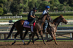 ARCADIA, CA  OCTOBER 25: Breeders' Cup Juvenile Fillies entrant Two Sixty, trained by Mark E. Casse, exercises in preparation for the Breeders' Cup World Championships at Santa Anita Park in Arcadia, California on October 25, 2019.(Photo by Casey Phillips/Eclipse Sportswire/CSM)