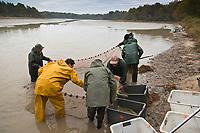 Europe/France/Centre/41/Loir-et-Cher/Sologne/env de Romorantin-Lanthenay: Pêche d'un étang <br /> Auto N°:2012-4110 , Auto N°:2012-4111 , Auto N°:2012-4112 , Auto N°:2012-4113<br /> // Europe/France/Centre/41/Loir-et-Cher/Sologne/Near Romorantin-Lanthenay: Fishing pond<br /> Auto N°:2012-4110 , Auto N°:2012-4111 , Auto N°:2012-4112 , Auto N°:2012-4113
