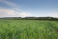 20-7-2021 Cover Crop Rutland <br /> ©Tim Scrivener Photographer 07850 303986<br />      ....Covering Agriculture In The UK....
