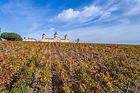 France, Gironde, Medoc, Saint Estephe, Chateau Cos d'Estournel and  the vineyards (aerial view) // France, Gironde (33), Médoc, Saint-Estèphe, Château Cos d'Estournel et les vignes (vue aérienne)