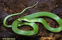 1R04-079a  Smooth Green Snake -  Opheodrys vernalis