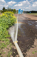 Leak in irrigation pipe - Cambriddgeshire, May