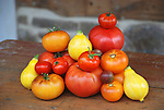 Heirloom Tomatoes Pink Ponderosa, Purple Smudge, German Lunch Box, Black Cherry and lemon squash