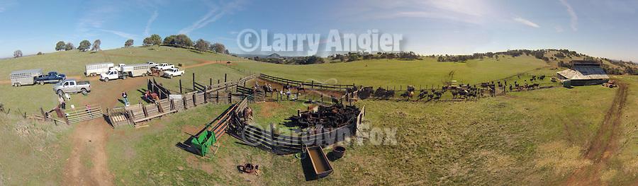Aerial panorama of calf marking and branding the Doug & Loree Joses at the Plasse Ranch near Jackson, Calif.