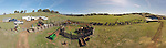 Aerial panorama of calf marking and branding the Doug & Loree Joses at the Plasse Ranch near Jackson, Calif.