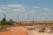 Gaucha do Norte, Mato Grosso, Brazil. Dirt road through cattle pasture in area recently cleared of forest with dead skeletons of trees still standing and a herd of cattle.
