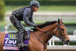 ARCADIA, CA - OCT 31: American Gal, owned by Kaleem Shah, Inc. and trained by Bob Baffert, exercises in preparation for the Breeders' Cup 14 Hands Winery Juvenile Fillies at Santa Anita Park on October 31, 2016 in Arcadia, California. (Photo by Douglas DeFelice/Eclipse Sportswire/Breeders Cup)