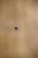 Europe/France/Pays de la Loire/49/Maine-et-Loire/Env de Saumur: Champs et cultures et labour au tracteur -  vue aérienne