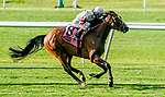 June 4, 2021: Baron Samedi #8, ridden by John Velazquez, wins the Belmont Gold Cup during Friday racing at the Belmont Stakes Festival at Belmont Park in Elmont, New York. Scott Serio/Eclipse Sportswire/CSM