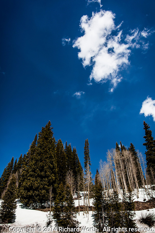 Springtime in the Rockies - A brilliant blue sky with a puff or two of white, green pines, leafless black and white aspen, and retreating snow revealing patches of warm brown earth.