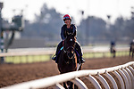 OCT 27: Breeders' Cup Juvenile  entrant Dennis' Moment, trained by Dale L. Romans,  at Santa Anita Park in Arcadia, California on Oct 27, 2019. Evers/Eclipse Sportswire/Breeders' Cup