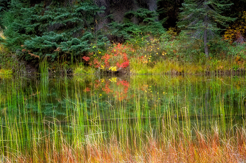 Small pond with fall color. North Cascades National Park. Washington