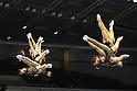 The 67th All Japan Artistic Gymnastics Apparatus Championship