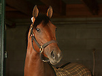10 April 2010.   Interactif on the morning of the Bluegrass Stakes.