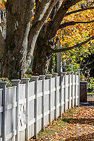 Charming white picket fence with autumn color, Woodstock, Vermont, USA