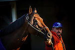 LOUISVILLE, KY - MAY 04: Nyqvist cools out after going to the track at Churchill Downs on May 04, 2016 in Louisville, Kentucky.(Photo by Alex Evers/Eclipse Sportswire/Getty Images)