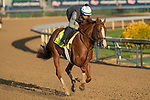 LOUISVILLE, KY - MAY 1: Good Magic, trained by Chad Brown, exercises in preparation for the Kentucky Derby at Churchill Downs on May 1, 2018 in Louisville, Kentucky. (Photo by Eric Patterson/Eclipse Sportswire/Getty Images)