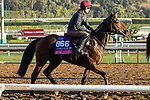 ARCADIA, CA  OCTOBER 31.Breeders' Cup Juvenile Fillies Turf entrant Tango, trained by Aidan P. O'Brien,   exercises in preparation for the Breeders' Cup World Championships at Santa Anita Park in Arcadia, California on October 31, 2019.  (Photo by Casey Phillips/Eclipse Sportswire/CSM)