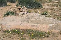 Sidi al-Gharib, near Tarhouna, Libya - Rhinoceros Stone Carving, Petroglyph, 8th millenium B.C.