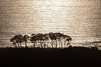 aerial photograph silhouette, Pacific coast, Santa Cruz county,  California