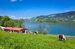 Deutschland, Bayern, Oberbayern, Markt Schliersee: Ort und gleichnamiger See, beliebtes Ausflugsziel zwischen dem Inntal und dem Tegernseer Tal, im Vordergrund die Rixner Alm, beliebte Raststation auf dem Seerundweg | Germany, Upper Bavaria, Schliersee: small town and popular climatic health resort at Lake Schliersee, at foreground the Rixner Alm, a popular place for a break on the way around the lake