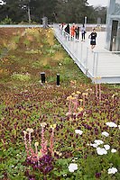 Observation deck for Green roof native plant meadow California Academy of Science
