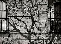 Paris, Tree Shadow, Baumschatten, Baum, 28.11.2013<br /> <br /> <br /> <br /> <br /> ***HIGHRES AUF ANFRAGE*** ***VOE NUR NACH RUECKSPRACHE***<br />  ***Keine Social_Media Nutzung***<br /> <br /> Engl.: Europe, France, Paris, Tree Shadow, shadows, trees, tree, windows, house wall, facade, 28 November 2013<br /> ***HIGHRES ON REQUEST***PUBLICATION ONLY AFTER CONSULTATION WITH LAIF***<br /> ***No social media use***